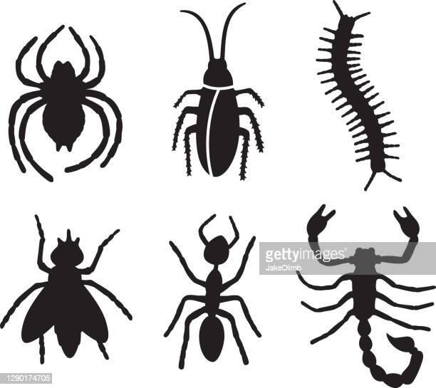 ilustrações de stock, clip art, desenhos animados e ícones de bug silhouettes 2 - centopeia
