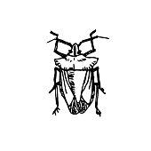 Bug sketch