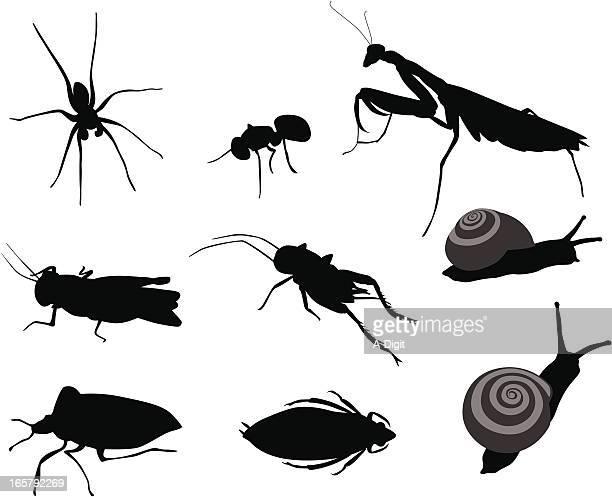 illustrations, cliparts, dessins animés et icônes de bugsbugs - escargot