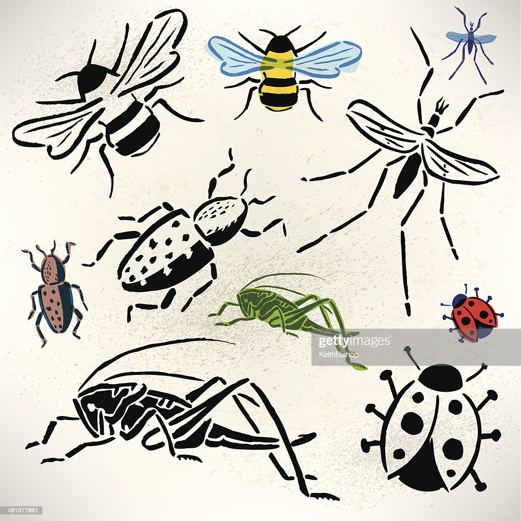 Bugs - Grasshopper, Beetle, Lady Bug, Bumble Bee, Mosquito : stock illustration