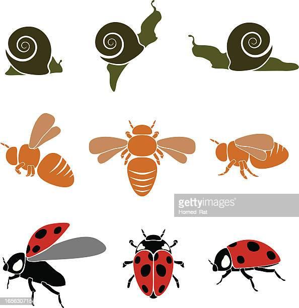 illustrations, cliparts, dessins animés et icônes de bugs - coccinelle