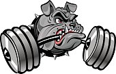 Bulldog for weight training, weightlifting, bodybuilding