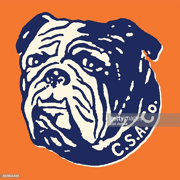 Bulldog in CSA Co. Collar