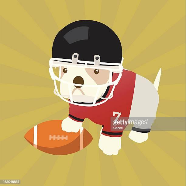 Bulldog puppy quarterback