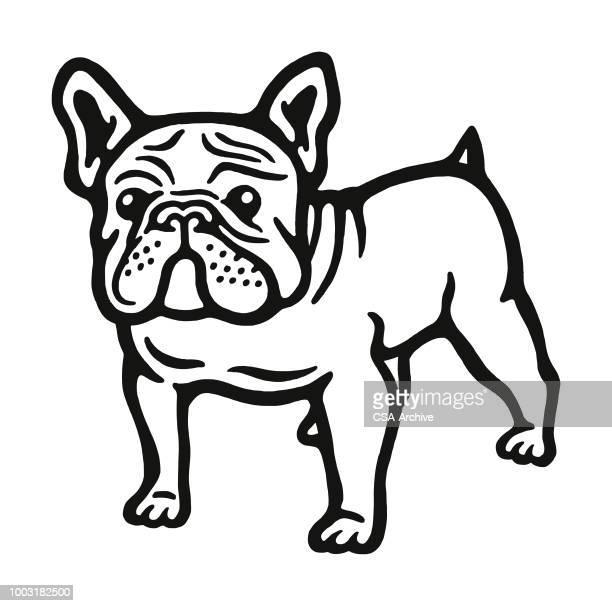 bulldog - french bulldog stock illustrations