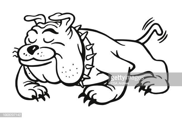 Pet Clothing Vector Art And Graphics