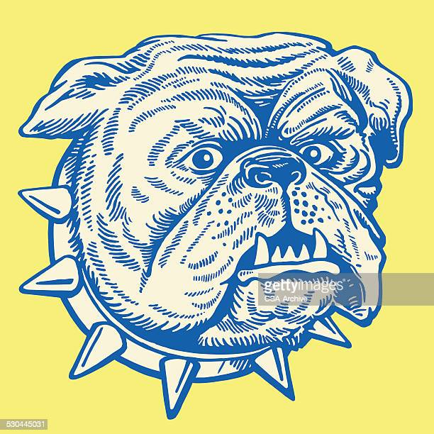Bulldog With Spiky Collar