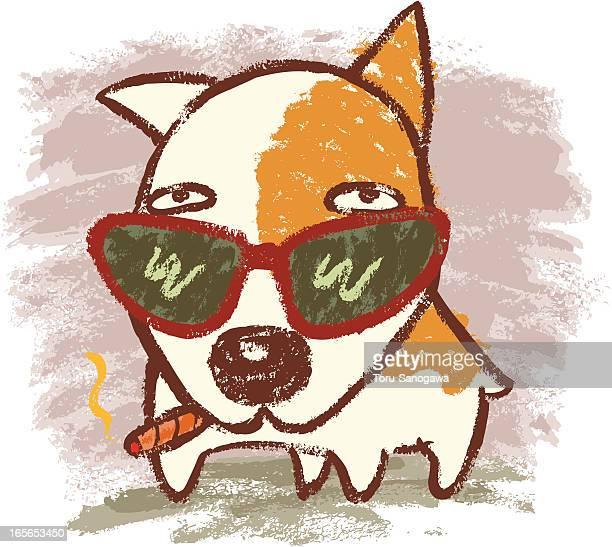 Bullterrier y gafas de sol