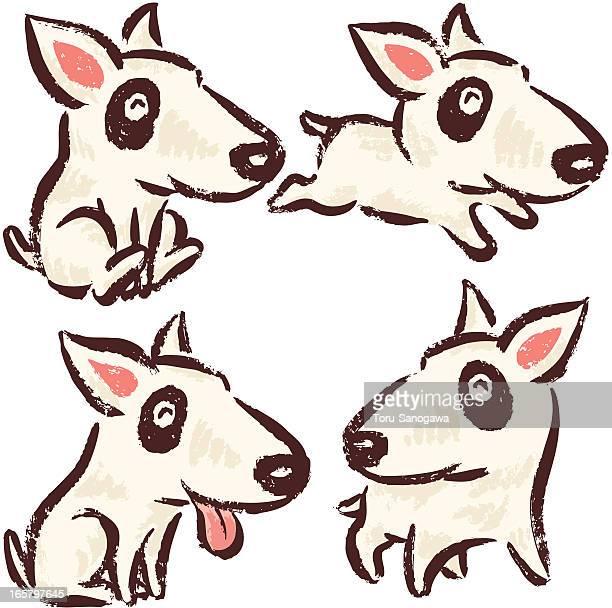 Bullterrier perro
