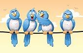 Bullying Birds