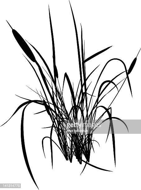 bulrush silhouette - reed grass family stock illustrations