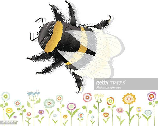Bumblebee with nice Flowers.