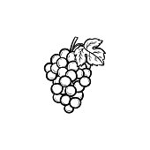 Bunch of grapes hand drawn sketch icon