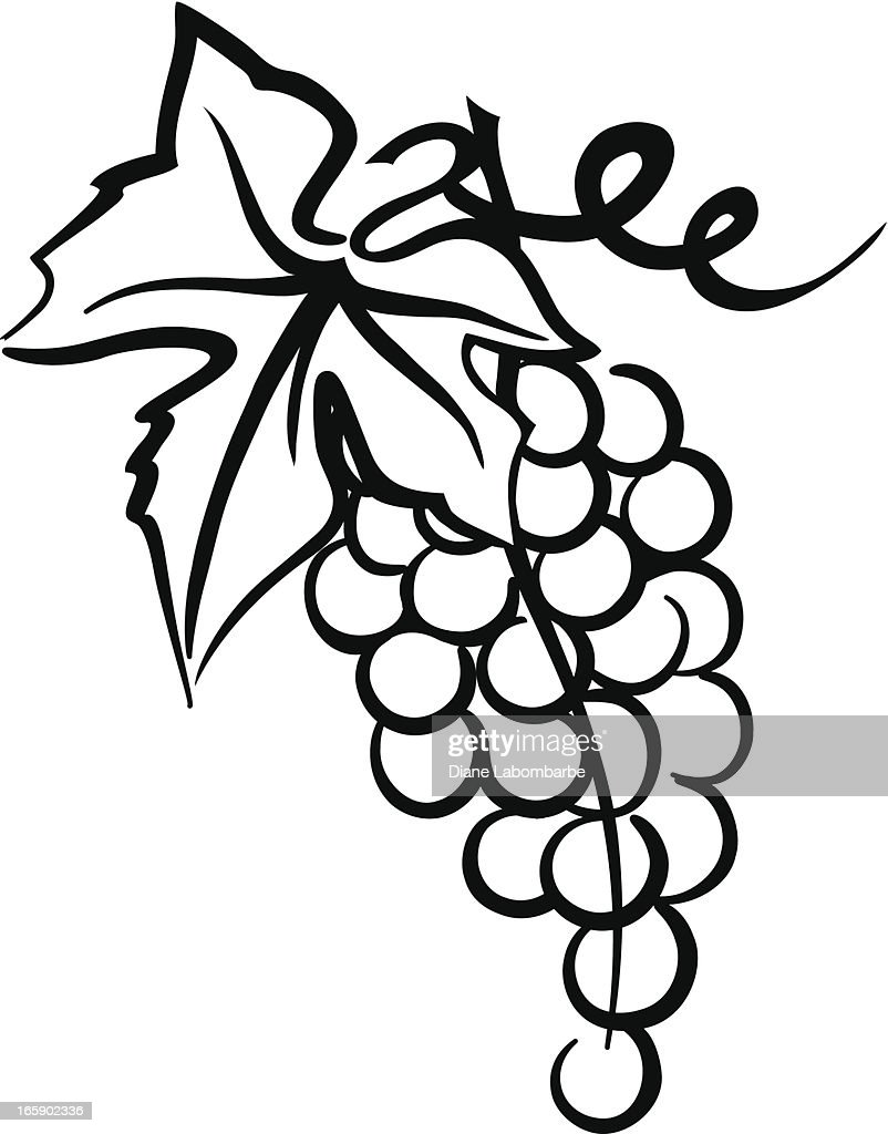 Bunch Of Grapes Simple Drawing With Leaf Swirly Vine Vector Art ... for Drawing Grape Vines  143gtk