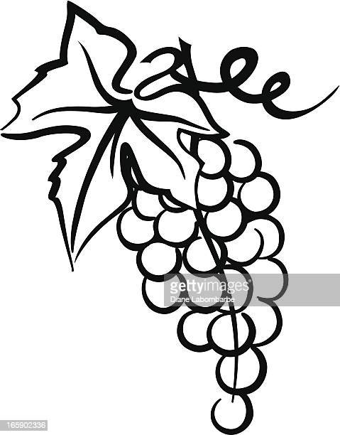 bunch of grapes simple drawing with leaf  swirly vine - grape stock illustrations, clip art, cartoons, & icons