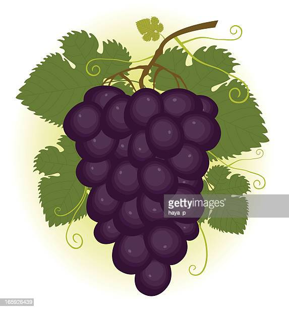 Racimo de violeta uvas
