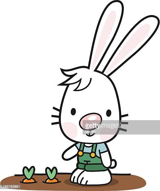 bunny as a gardener with carrot / Farm Animal