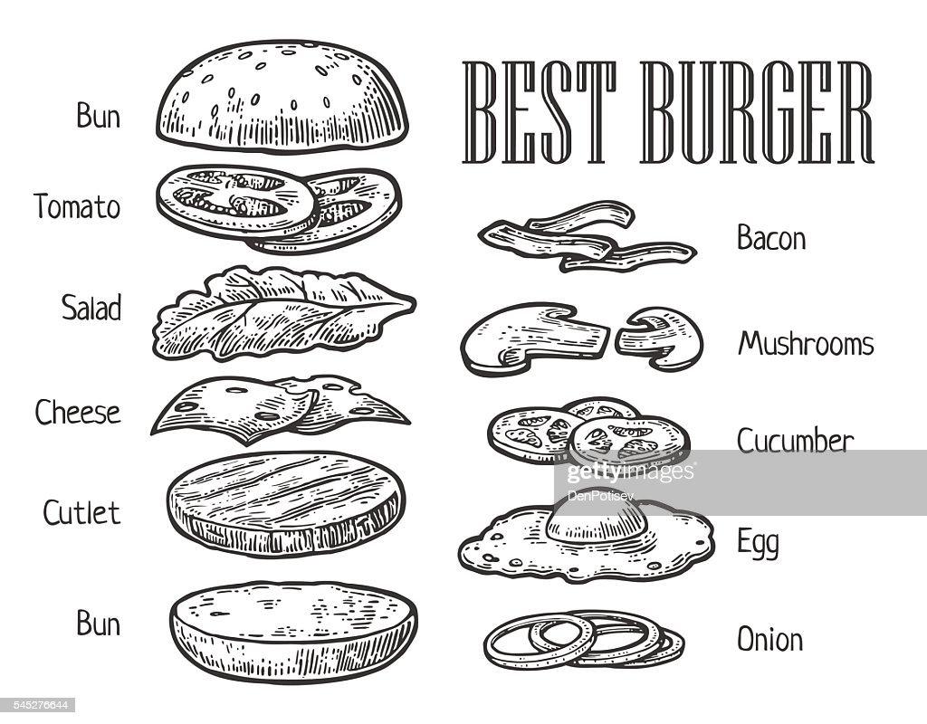 Burger ingredients. Vector vintage engraving illustration for menu
