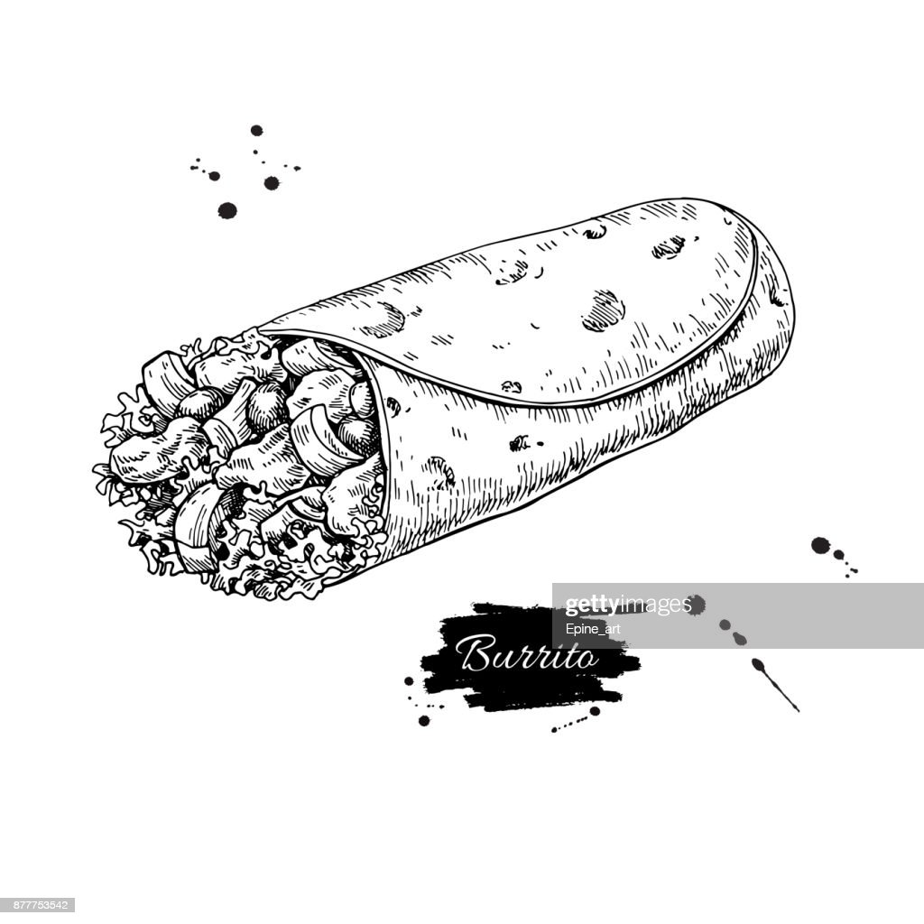 Burrito drawing. Traditional mexican food vector illustration