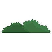 Bush isolated symbol
