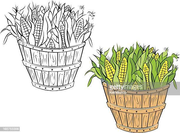 bushel of corn in husks - corn stock illustrations, clip art, cartoons, & icons