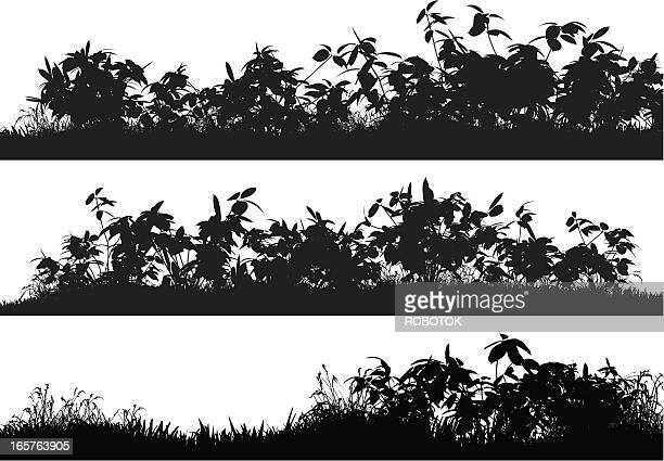 bushes and grass - vegetable garden stock illustrations, clip art, cartoons, & icons