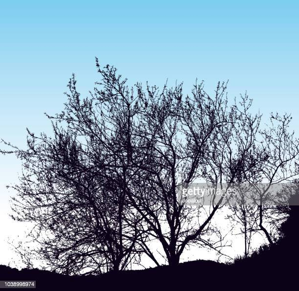 bushes and trees horizons silhouette - deciduous tree stock illustrations, clip art, cartoons, & icons
