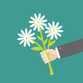 Businessman hand holding bouquet of white daisy flowers. Flat design.