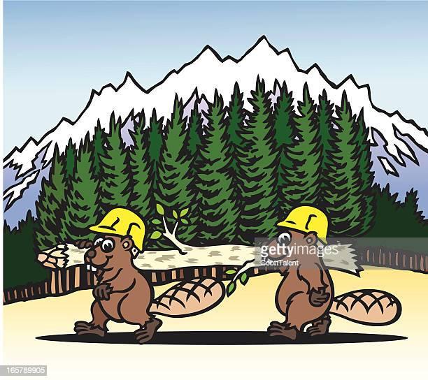 busy beavers - funny beaver stock illustrations