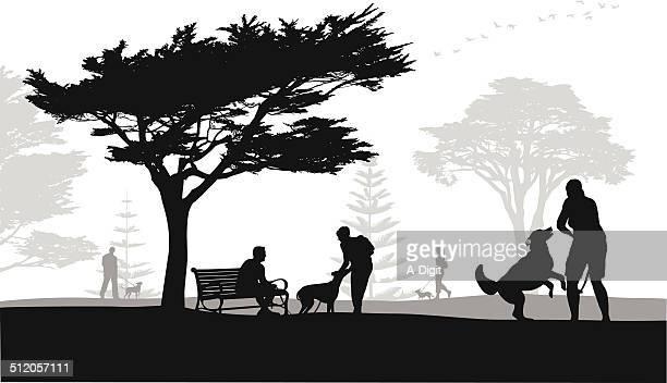 busydogpark - cypress tree stock illustrations