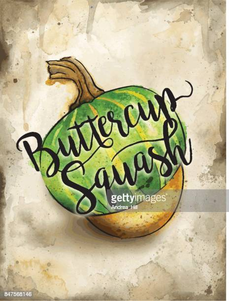 buttercup squash painted in watercolor on rustic brown background. vector eps10 - buttercup stock illustrations, clip art, cartoons, & icons