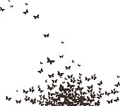 butterflies black design
