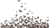butterflies black vector