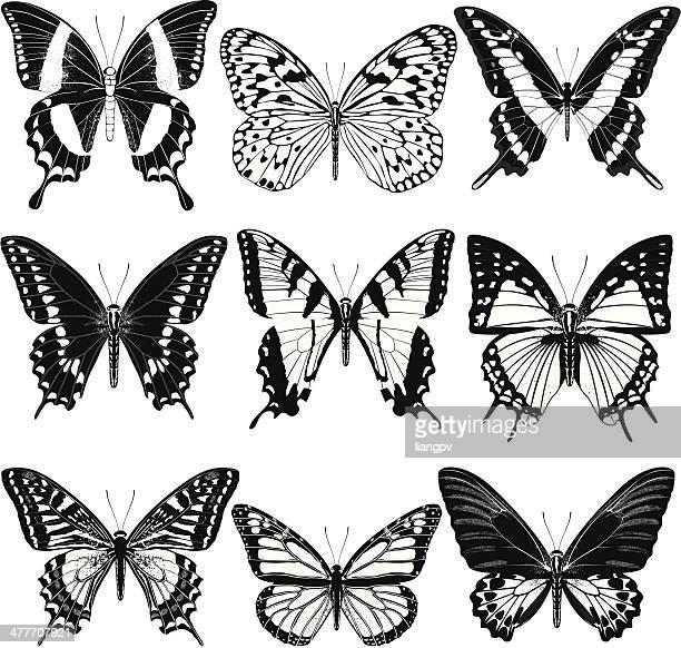 butterflies - swallowtail butterfly stock illustrations