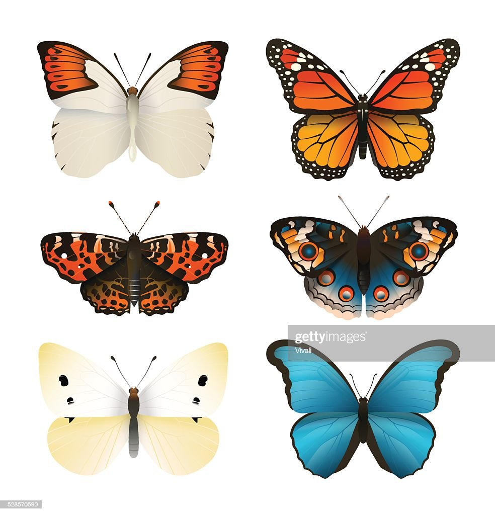 Butterflies vector set. Colorful flat butterfly. Realistic color gradient