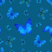 butterfly 07 blue