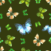 butterfly 07 dark