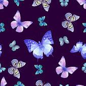 butterfly 07 violet