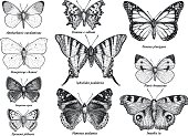 Butterfly collection, illustration, drawing, engraving, ink, line art, vector