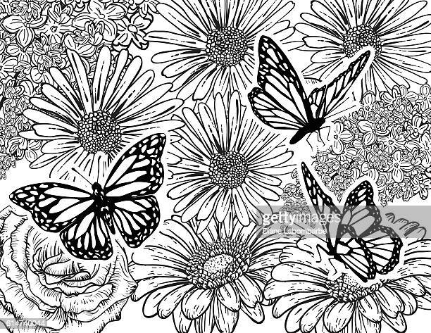 butterfly hand drawn adult coloring book page - adult stock illustrations