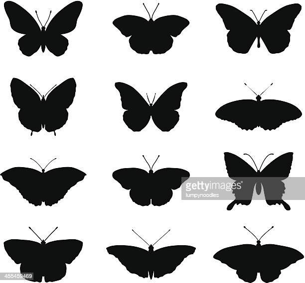 ilustrações, clipart, desenhos animados e ícones de silhueta de borboletas - borboleta