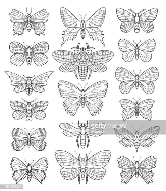butterfly vector doodle set - butterfly insect stock illustrations