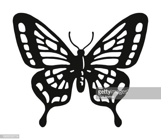 butterfly - one animal stock illustrations