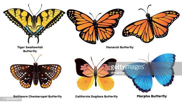 ilustraciones, imágenes clip art, dibujos animados e iconos de stock de mariposa - mariposa monarca