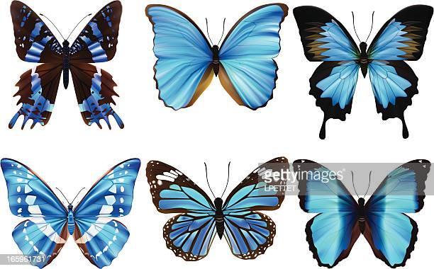 ilustrações, clipart, desenhos animados e ícones de borboleta-ilustração vetorial - asa animal