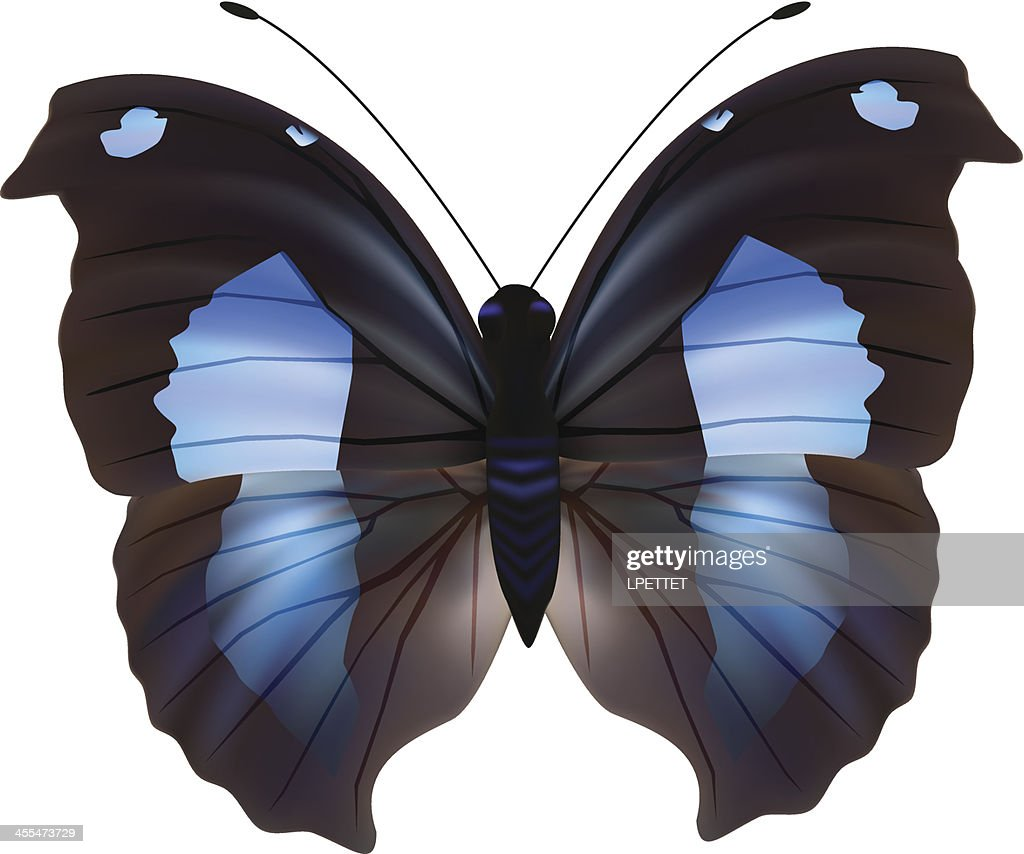 Butterfly - Vector Illustration