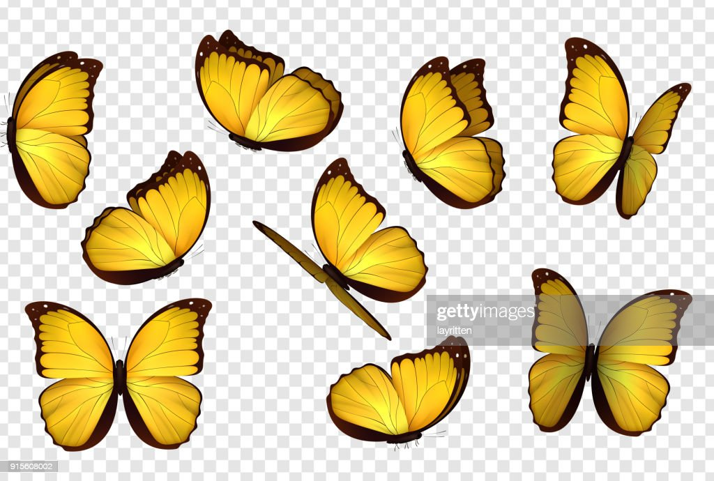 Butterfly yellow vector illustration.
