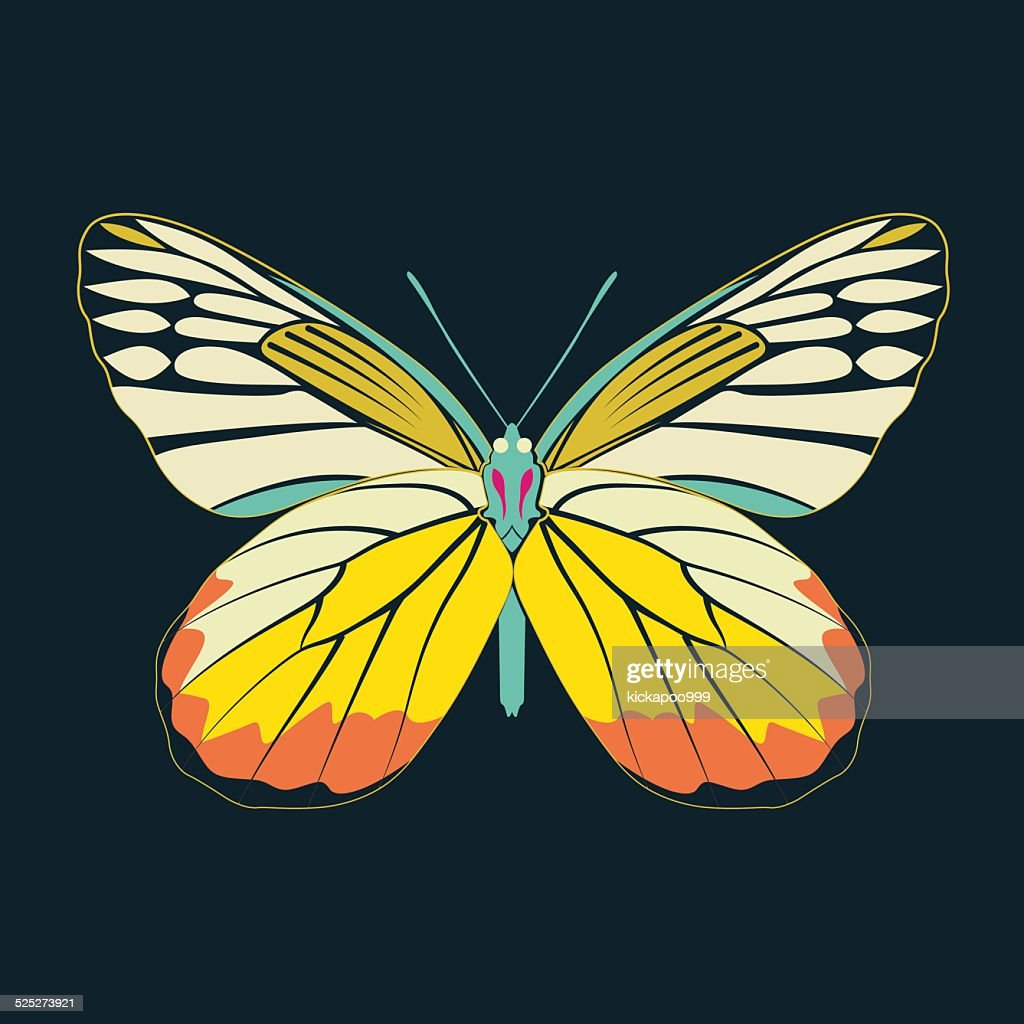butterfly yellow wing abstract on navy background