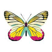 butterfly yellow wing abstract on white background