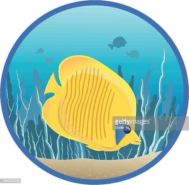 butterflyfish / poisson papillon - butterflyfish stock illustrations, clip art, cartoons, & icons